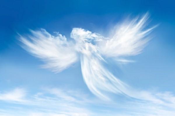 SHニュースplus ★7月28日、聖地・徳島に特別記念堂落慶 記念法話「魂の洗礼」を全国中継